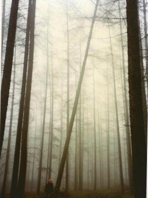1997 zagen kluiverboom