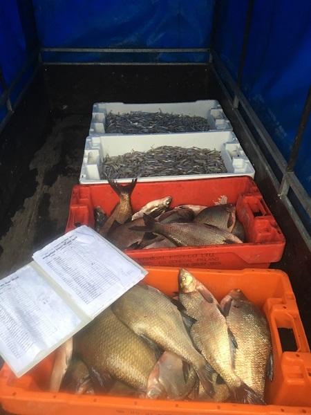 aanhangwagen-vol-met-vis